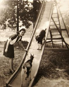 You never get to see two goats go down a slide together anymore. | 40 Pictures That Show Just How Much The World Has Changed