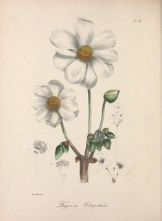 v.1 (1837) - The floral cabinet and magazine of exotic botany / - Biodiversity Heritage Library