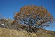Schweiz Wallis Guttet Berge Alpen Herbst