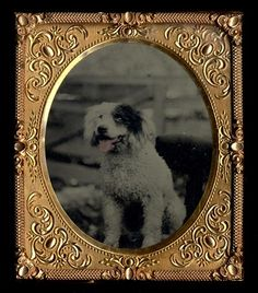 George Eastman House  Descriptive Title: Small dog with pink tongue, sitting on chair  ca. 1858  Tintype
