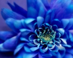 Gorgeous blues, and I love the sharp detail in the centre with the fuzziness farther out