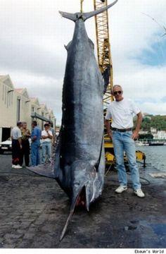Amazing Catch! - Big Fish Caught By Fisherman