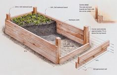How build arrange raised bed vegetable garden, Raised bed vegetable garden is great: they prevent soil compaction, allow for good drainage, keep pathway weeds from your garden soil. My raised vegetable garden beds Raised Garden Bed Plans, Building Raised Garden Beds, Container Gardening, Gardening Tips, Organic Gardening, Gardening Services, Succulent Containers, Container Flowers, Container Plants