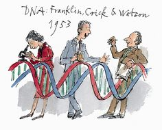 Franklin, Crick and Watson (Quentin Blake is part of Science Museum Shop - An extra large, solid fridge magnet, supplied on a gift card in cello bag Science Geek, Science Humor, Science Art, Science And Nature, Science And Technology, Quentin Blake, Dna Cloning, Dna Art, James Watson