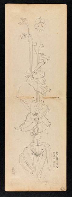 Hunterian Art Gallery Mackintosh collections: GLAHA 53012/4