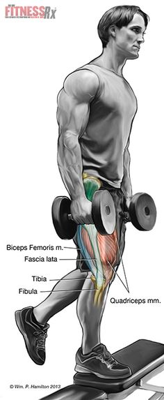 Muscle Form and Function - Ignite a Lower Body Revolution with Step-ups on a Bench Track Workout, Butt Workout, Fitness Diary, Fitness Tips, Bodybuilding Workouts, Bodybuilding Motivation, Fit Board Workouts, Leg Workouts, Body Revolution