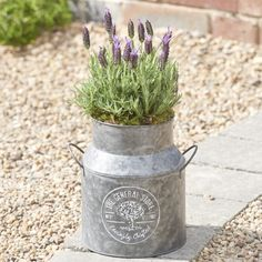 Our beautifully scented Lavender Milk Churn will be a fabulous addition to your garden this summer.