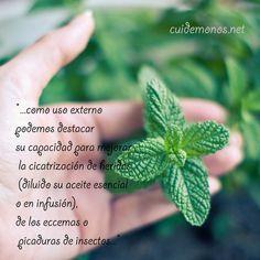 Plantas y sus propiedades: http://www.cuidemonos.net/2014/06/plantas-y-propiedades-iii.html