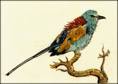 The Abyssinian Roller original watercolor painting by Juan Bosco