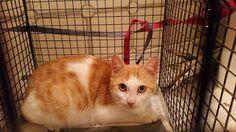 Le cronache animali: Appello - Gattini di 6 mesi in cerca di adozione