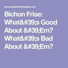 Bichon Frise: What's Good About 'Em? What's Bad About 'Em?