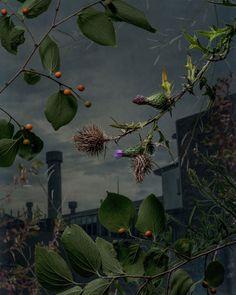 Daniel Shipp's Photography Exhibition 'Botanical Inquiry'   Yellowtrace