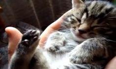 Kitten Sleeps Soundly In Hand (Video)