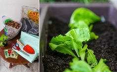 Alface, alecrim, manjericão e tomate são alguns dos alimentos fáceis de se cultivar em casa (Fotos: Rafael Munhoz)