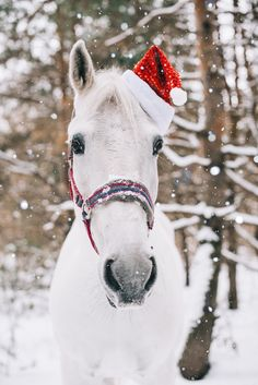 Adorable festive white horse by Anastasia Belousova on 500px.com