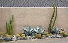 Neighbor's house: love  that!   Love the simpl ic i ty  of it, love the three  different kin ds  of yellow-green (two different cacti, Allu...