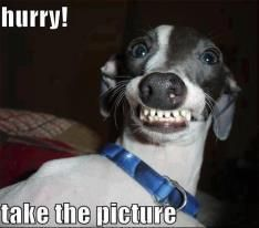 Funny smiling dog picture - http://jokideo.com/funny-smiling-dog-picture/
