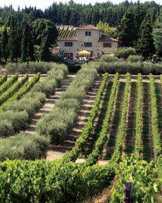 The Cuillo vineyards at Casalvento, Tuscany, Italy - Livernano winery - Casalvento winery
