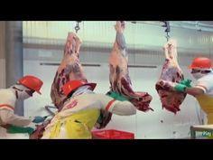 Exportación de Carne Bovina Colombiana a Jordania- TvAgro por Juan Gonza...