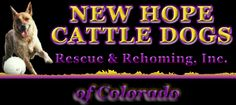 New Hope Cattle Dog Rescue of Colorado - like our Facebook page:  https://www.facebook.com/pages/New-Hope-Cattle-Dogs-Rescue-of-Colorado/176914999010640