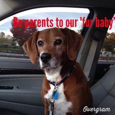 ❤️puppy love❤️ Puppy Love, Fur Babies, Parents, Puppies, Check, Baby, Dads, Cubs, Raising Kids