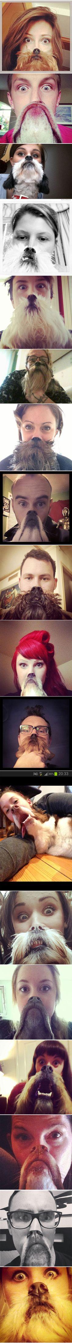 epic dog beards :)