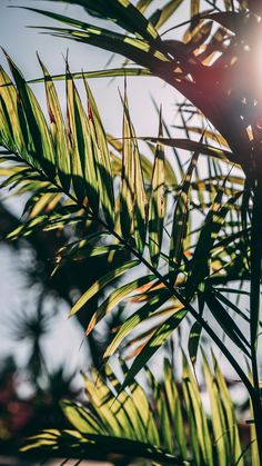 Summer vibes only on We Heart It - Aesthetics - Wallpaper Emoji Wallpaper, Cute Wallpaper Backgrounds, Pretty Wallpapers, Screen Wallpaper, Phone Backgrounds, Aesthetic Backgrounds, Aesthetic Iphone Wallpaper, Aesthetic Wallpapers, Natur Wallpaper