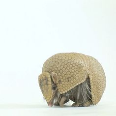 "606.5 k likerklikk, 14.9 k kommentarer – National Geographic (@natgeo) på Instagram: ""Video by @joelsartore 