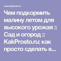 Чем подкормить малину летом для высокого урожая :: Сад и огород :: KakProsto.ru: как просто сделать всё