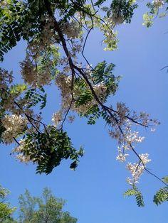 Palawan Cherry Blossom by chiyokuhime.deviantart.com on @DeviantArt