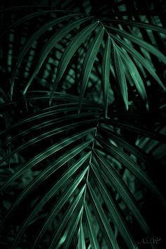 Palm leaves. Tropical dark backgrounds
