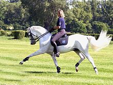 Stunning movement. Akhal-Teke - Wikipedia, the free encyclopedia