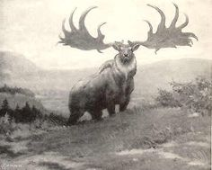 Irish Elk  Herds of the Giant Irish Elk lived in Europe and Ireland.  It stood six feet high at its shoulders, the size of Moose, and its broad antlers spanned ten feet.