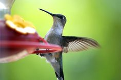 Hummingbird through the glass