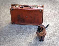 Moving with mog: 5 Essential Tips For Relocating With Your Cat - Katzenworld Bolivian Food, Bolivian Recipes, One Suitcase, Cool Photos, Cats, Amazing, Check, Animals, Recipes