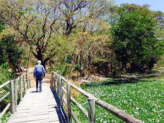 Palo Verde National Park, Costa Rica.