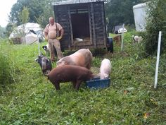 Eva McSqueek and her girlfriends have moved from NC to our farm.