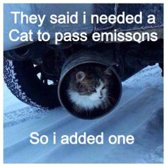 Add a #cat #carhumour
