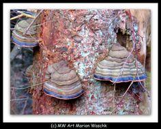 MW Art Marion Waschk, Pilze, Bäume, Landschaft, Sparziergang, Hagen, NRW, Foto, fotobearbeitung, KAmera, Äste, blätter, Zweige, Wald, Mischwald,