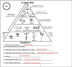 Technology / Energy Pyramid/Food Webs