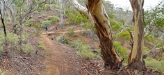 The Island in Werribee Gorge State Park is a moderately challenging km / 4 hour hike, providing excellent views across the park. Gorges State Park, State Parks, Wanderlust, Hiking, Australia, Island, Plants, Walks, Block Island
