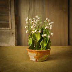 Lily of the Valley Porcelain Sculpture  Beautiful hand-sculpted porcelain botanicals in terra cotta pots, by artist Pamela Tidwell.