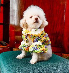Rainbows n Marshmellows.....Doggy shrug by CanineCoutureLTD