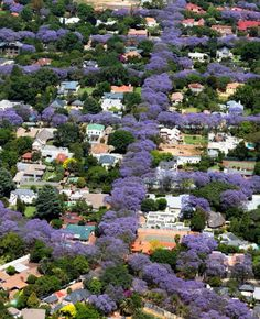 There is a picture of Johannesburg with the pretty jackaranda trees! That looks like Johannesburg right now!