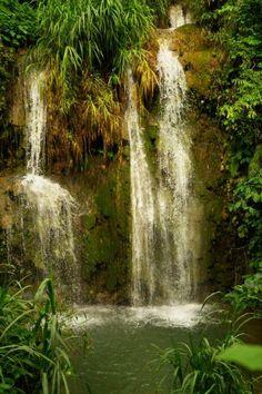 Los árboles preservan nuestras riquezas naturales y nuestros ríos