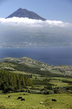 Ilha do Faial - Açores - Portugal. À distância, a Ilha do Pico e seu monte. No PICO, o ponto mais alto de Portugal.