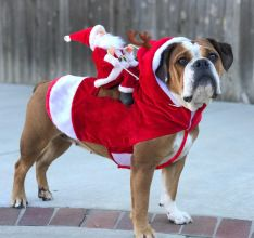 Christmas Dog Clothes Santa Dog Costumes Holiday Party Dressing up Clothing for Smal Medium Large Dogs Funny Pet Outfit Riding Dog Christmas Clothes, Dog Christmas Gifts, Christmas Animals, Christmas Costumes, Santa Christmas, Christmas Carnival, Le Plus Grand Chien, Costume Chien, Pet Costumes