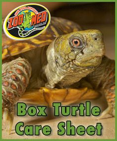 Check out Zoo Meds custom Care Sheet for Box Find more Care Sheets available on our website. Turtle Care, Pet Turtle, Mock Turtle, Tortoise Care, Tortoise Turtle, Box Turtle Habitat, Eastern Box Turtle, Box Turtles, Easy Pets
