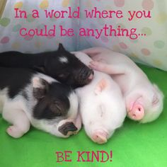 pet pig micro -- Click Visit above for more options Pet Pigs, Baby Pigs, Guinea Pigs, Funny Animals, Cute Animals, Baby Tea, Miniature Pigs, Pig Ears, Small Pigs