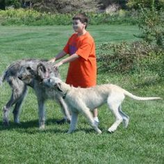 this comes from www.playinnature.com and it is of my grandson and Wolfhounds Aile & Bodhi